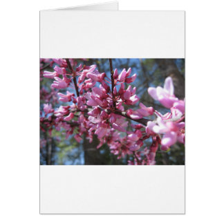 Pink Floral Branch Greeting Card