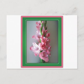 Pink Gladiolus Post Cards