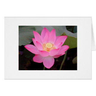 Pink Lotus Flower In Bloom Card