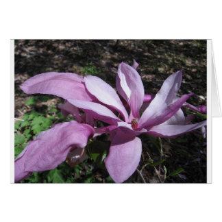 Pink Magnolia In Bloom Greeting Card
