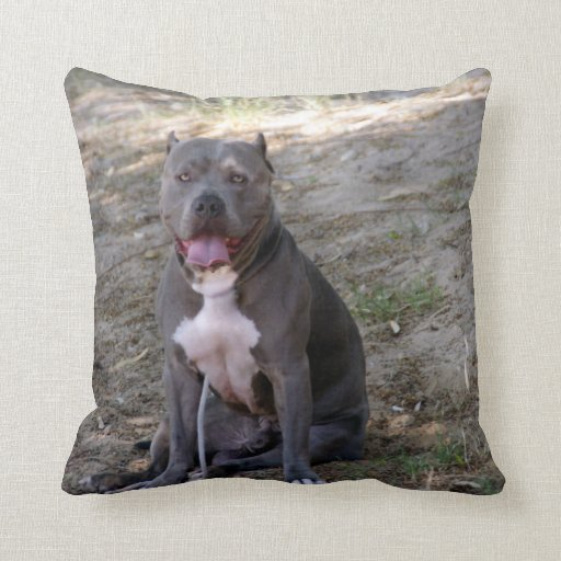 Pit Bull Pillow  Zazzle