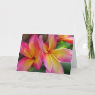 Plumeria Card card