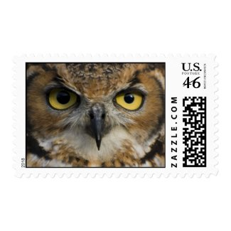 Postage Stamp - Owls Eyes stamp