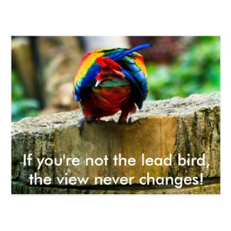 Postcard, If you're not the lead bird,