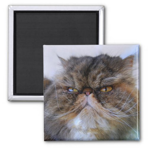 Proud Calico Persian Cat Magnet