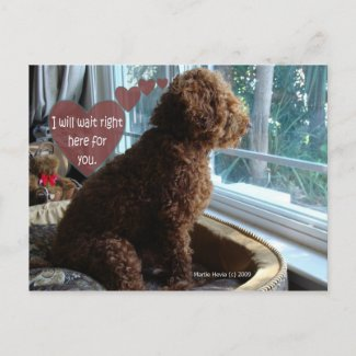 Proud Poodle - Missing You - Postcard postcard
