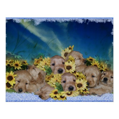 PUPPIES AND FLOWERS - GOLDEN RETRIEVER POSTER by dogproducts