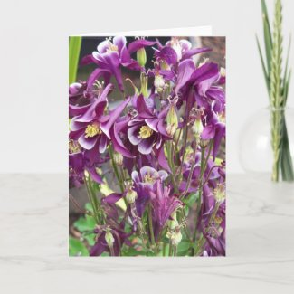Purple and White Columbines Card card