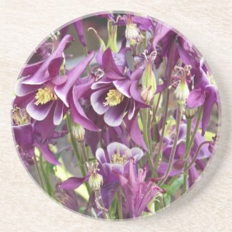 Purple and White Columbines Coaster coaster