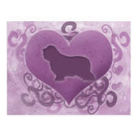Purple Bearded Collie Valentine Postcard