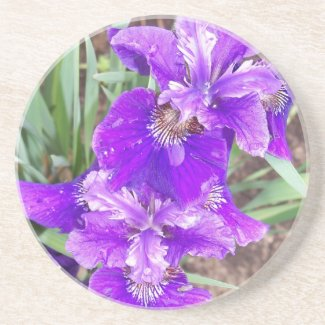 Purple Iris with Water Droplets Coaster coaster