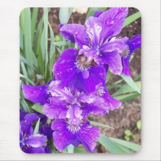 Purple Iris with Water Droplets Mousepad mousepad