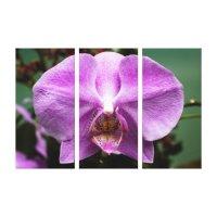 Purple Orchid Triptych Wall Art | Zazzle