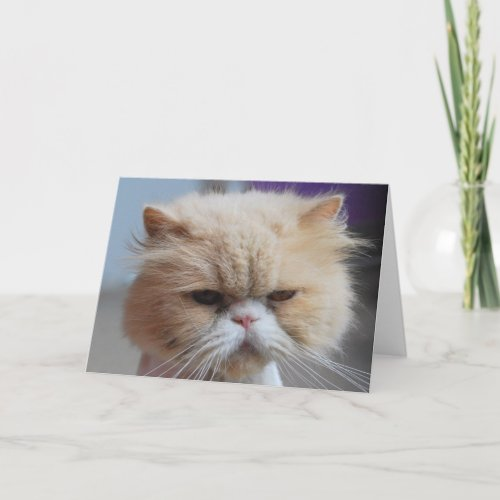 Purr-fect Persian Cat Greeting Card card