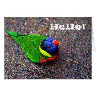 Rainbow Lorikeet Hello (blank inside) Greeting Card