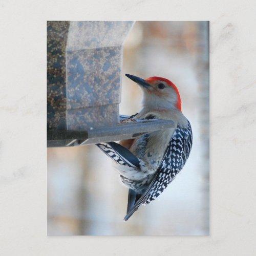Red-bellied Woodpecker at Bird Feeder Postcard postcard