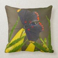 Red-bordered Pixie on esperanza brush Throw Pillows