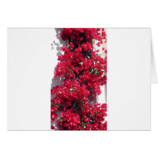 Red Bougainvillea Greeting Cards