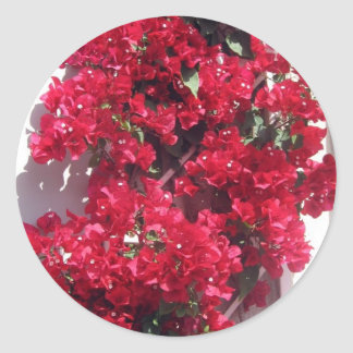 Red Bougainvillea Stickers