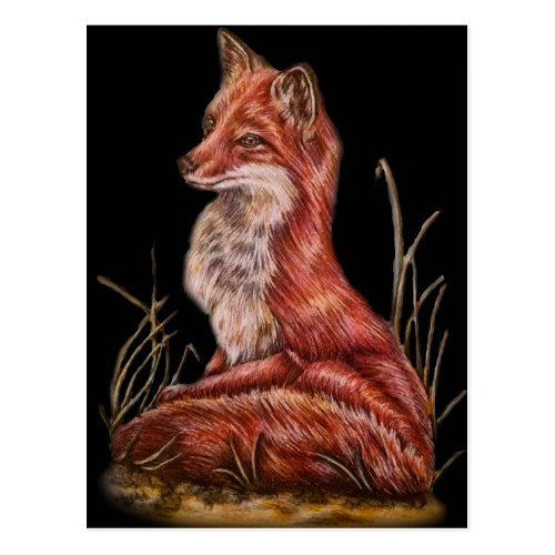 Red Fox Animal Art Drawing Postcard