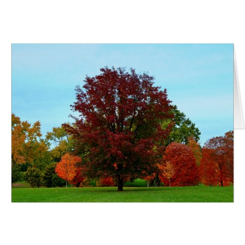 Red Oak Tree in Autumn Greeting Card