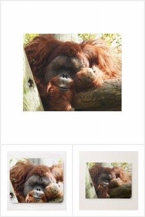 Red Orangutan