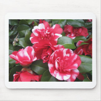 Red & White Striped Roses Mousepad