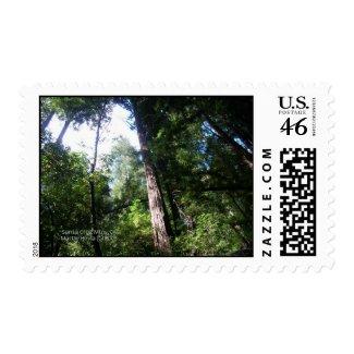 Redwoods Postage stamp