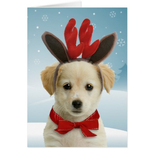 Gorgeous Labrador Xmas Cards For The Holidays The Cool