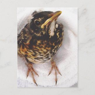 Rescued Robin Postcard by S.Lynnette