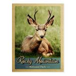 Rocky Mountain National Park Deer Vintage Postcard