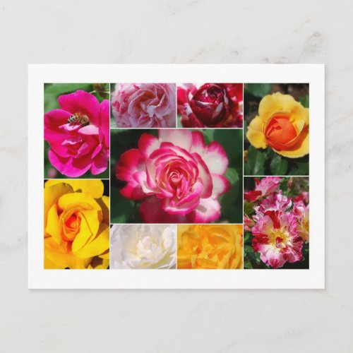 Rose Collage Postcard postcard