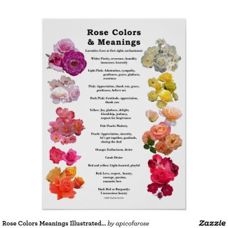 Rose Colors Meanings Illustrated List Poster