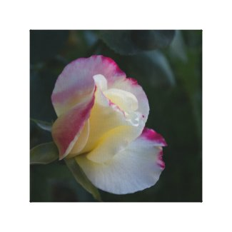 Rose on Canvas Canvas Print
