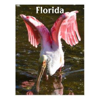 Roseate Spoonbill Wings
