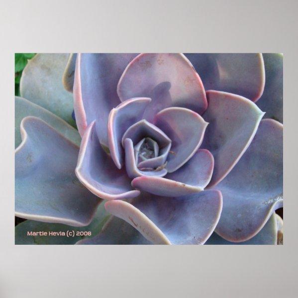 Rosette Succulent Beauty Print