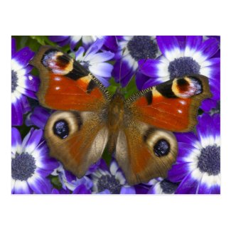 Sammamish Washington Photograph of Butterfly 10 Post Card