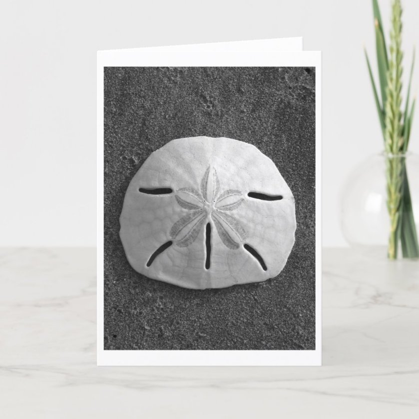 Sand Dollar (Black and White) Card