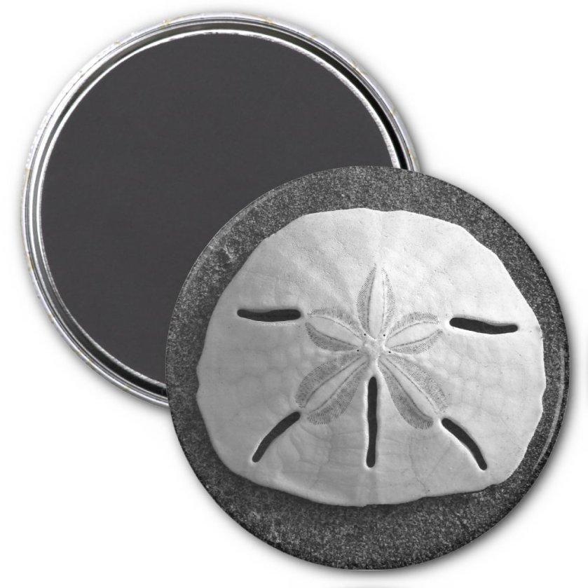 Sand Dollar Sea Shell Beach Magnet