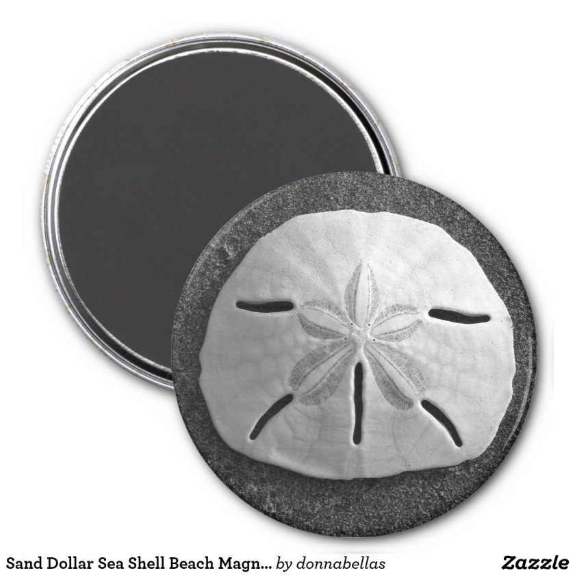Sand Dollar Sea Shell Beach Magnet