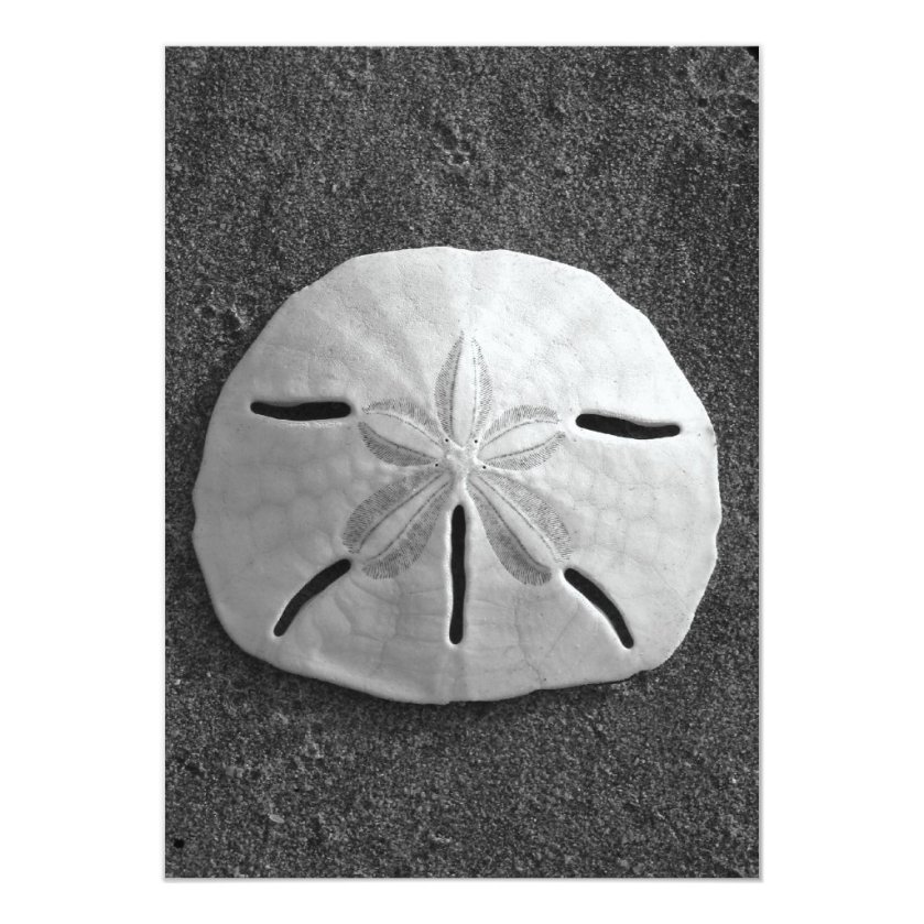 Sand Dollar Shell Beach Invitation (B&W Photo)