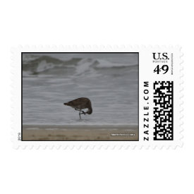 Sandpiper Bows Postage Stamp