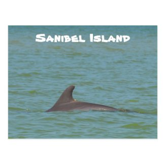 Sanibel Dolphin Postcard