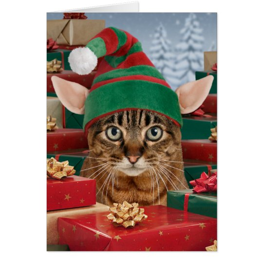 Santas Elf Cat Christmas Card