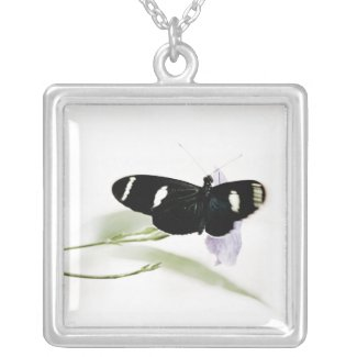 photo charm necklace of black butterfly