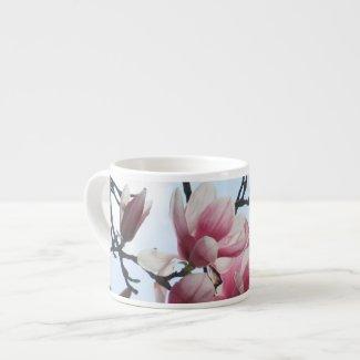 Saucer Magnolia Tulip Tree Pink White Flowers