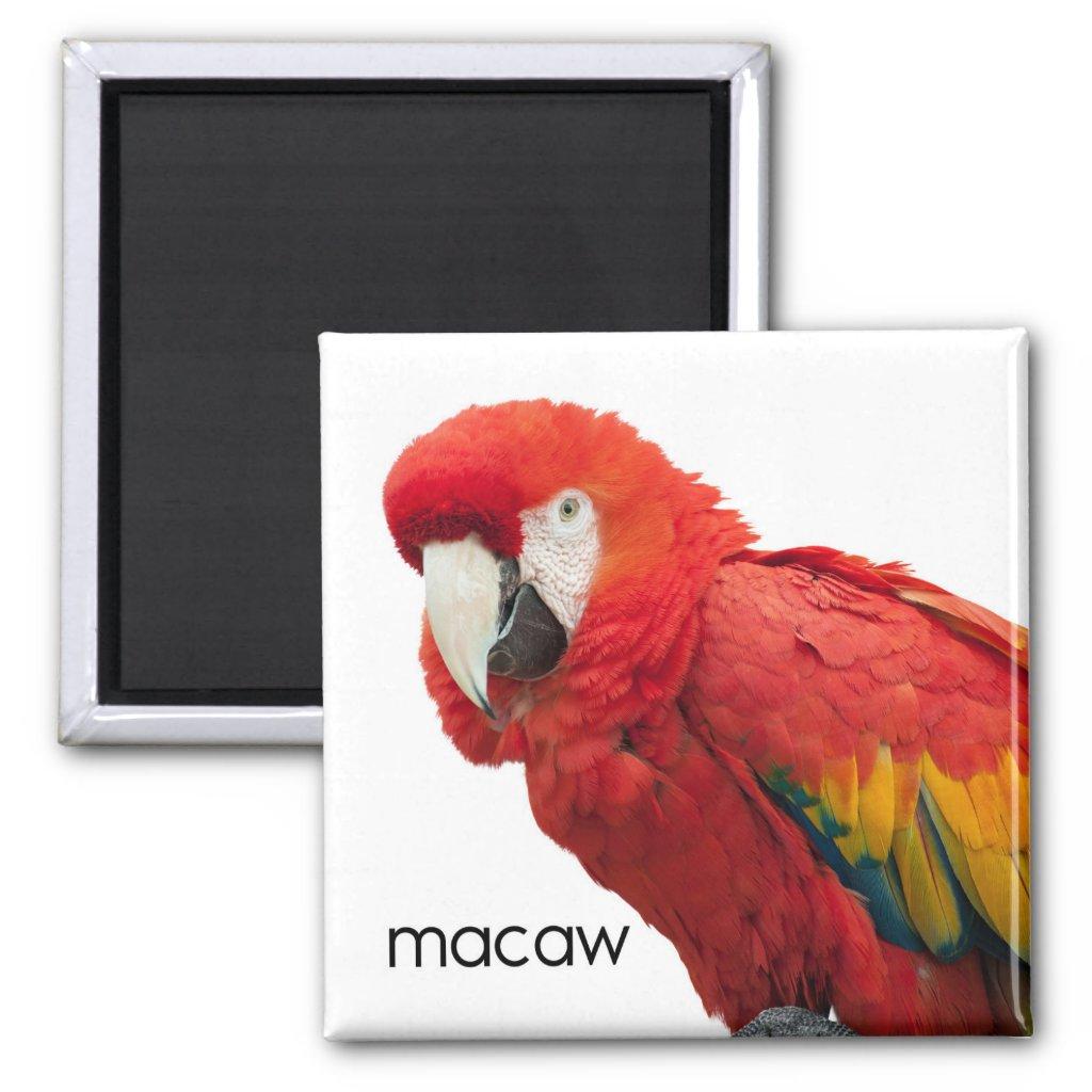 Scarlet Macaw Bird Magnet