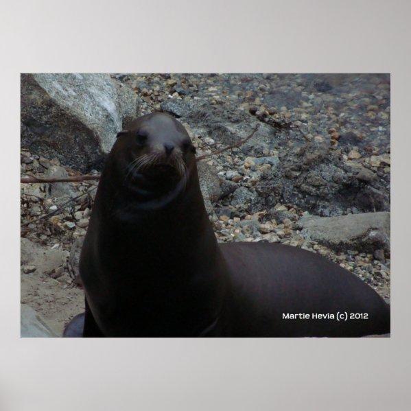 Sea Lion Close-Up zazzle_print