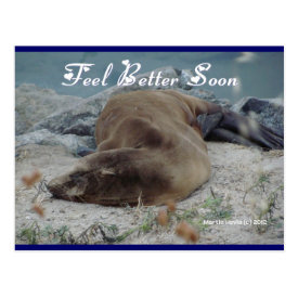 Sea Lion - Feel Better Soon - Postcard