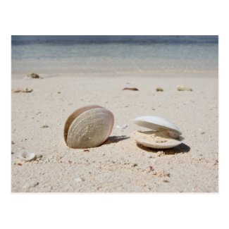 Seashells on sandy Caribbean beach close-up Post Card